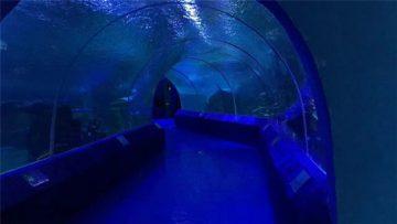 Panneaux acryliques à 180 ou 90 degrés pour tunnel d'aquarium