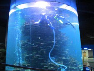 grand aquarium acrylique transparent pour aquariums ou parc océanique