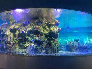 bols à poissons en usine, aquariums ronds en verre