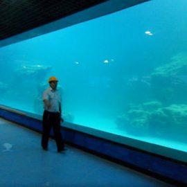 Panneau acrylique UV de mur de fonte pour aquarium / oceanarium