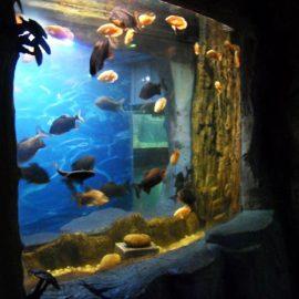 Panneau acrylique 2018 de qualité supérieure pour fenêtre d'aquarium