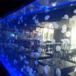 Feuille acrylique Réservoir de méduses