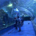 Acrylique tunnel oceanarium projet dans les aquariums publics