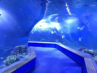 Acrylique pmma clair Grand tunnel en plastique pour aquarium