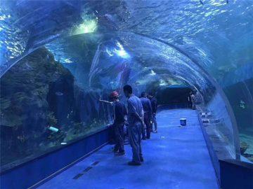 Aquarium tunnel acrylique en plexiglas sur mesure