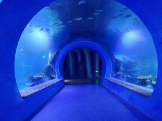 Aquarium acrylique grand tunnel haut transparent de différentes formes