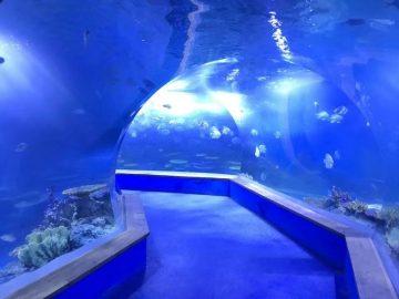 verre acrylique transparent Tunnel aquarium